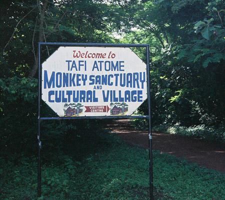 Image result for tafi monkey sanctuary