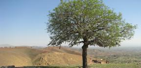 Hajgharetaghu1
